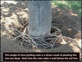 Tree Risk
